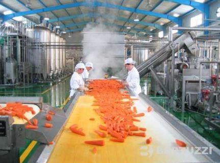 food processing boiler